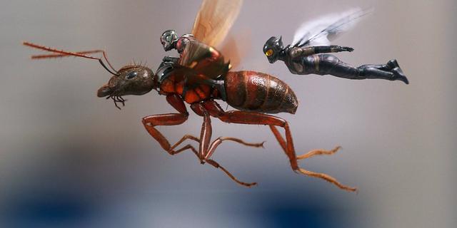 Evangeline Lilly dice que Ant-Man and the Wasp es 'un cruce entre Moonlighting y Batman y Robin'